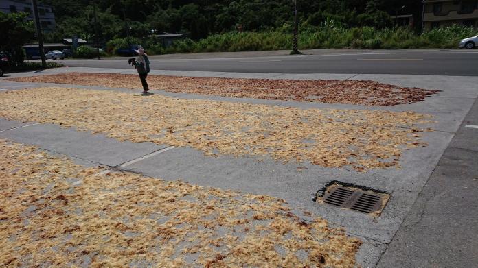 ▲東北角海岸盛產石花菜,濱海公路兩旁曬製石花菜,遠遠看去就像是舖上了一片片地毯。(示意圖/新北市漁業處提供)