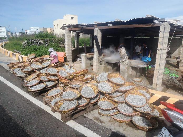 澎湖丁香禁漁令5月1日開始 漁民切勿觸法