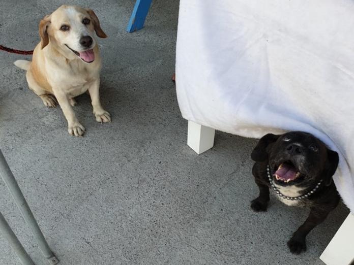 還好園長的兩隻狗狗「浩呆」與「八爺」發現幼貓們,才能阻止悲劇發生!(圖/FB@徐文良徐園長護生園)