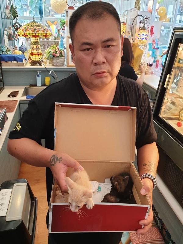 徐園長與剛被發現的小貓們(圖/FB@徐文良徐園長護生園)