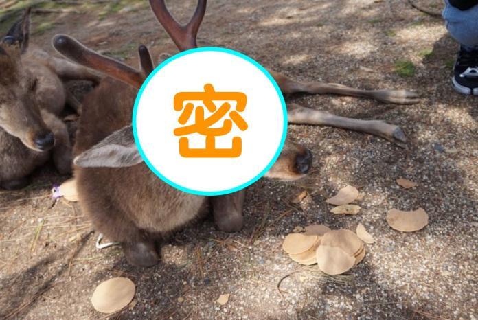 人類好煩!<b>黃金週</b>遊客多 奈良鹿被「仙貝疊疊樂」超無奈