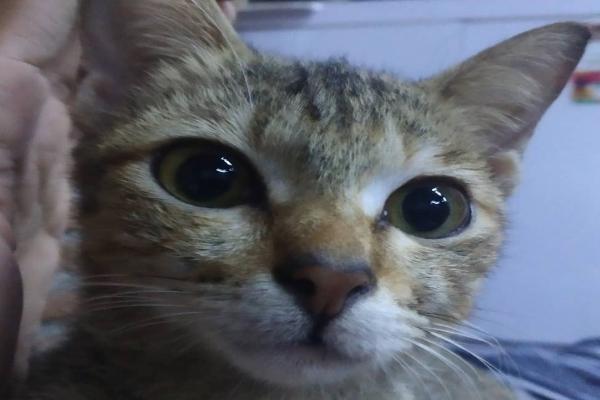 小貓試圖以萌萌大眼乞求原諒(圖/FB@Haryanto Pherwhirra Ramadhani)