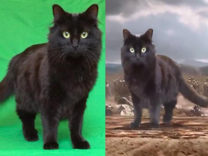 (圖/cat adoption team 以及翻攝自IG@owl__kitty)
