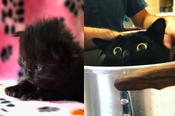 Lizzy小時候與長大後模樣,因為有一雙像貓頭鷹般的超圓大眼,於是主人幫牠取綽號叫OwlKitty(圖/IG@owl__kitty)