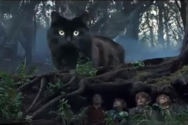 「魔戒喵~」,後來連男主角擋不住牠的誘惑開罐罐啦!(圖/翻攝自FB@Mew Mew TV)