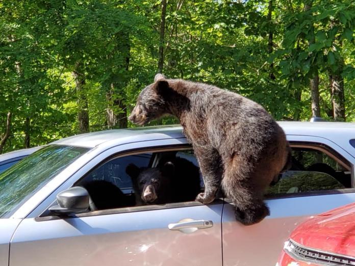 <b>熊</b><b>熊</b>集團偷竊轎車 現行犯「搖頭晃腦」搶看鏡頭