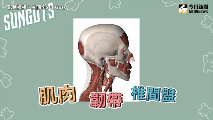 <br> ▲ 脖子周圍除了有頸椎(骨頭)以外,還有肌肉、韌帶、椎間盤、神經等重要組織。(圖/三個字SunGuts 授權)