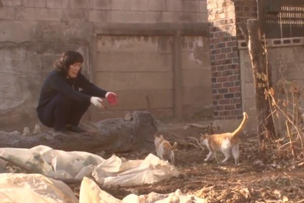婦女在家附近收養兩隻橘白貓,並在自家院子為牠們提供食宿(圖/Youtube@Kritter Klub)