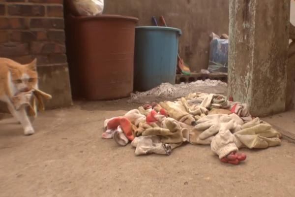 然後以各類手套將恩人家的庭院堆好堆滿,以表示牠的滿心感謝!(圖/Youtube@Kritter Klub)