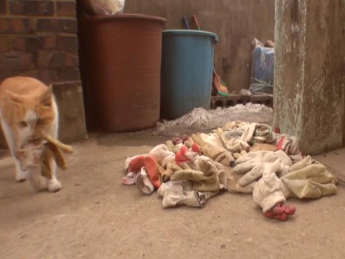 橘貓以各類手套將恩人家的庭院堆好堆滿,以表示牠的滿心感謝!(圖/Youtube@Kritter Klub)