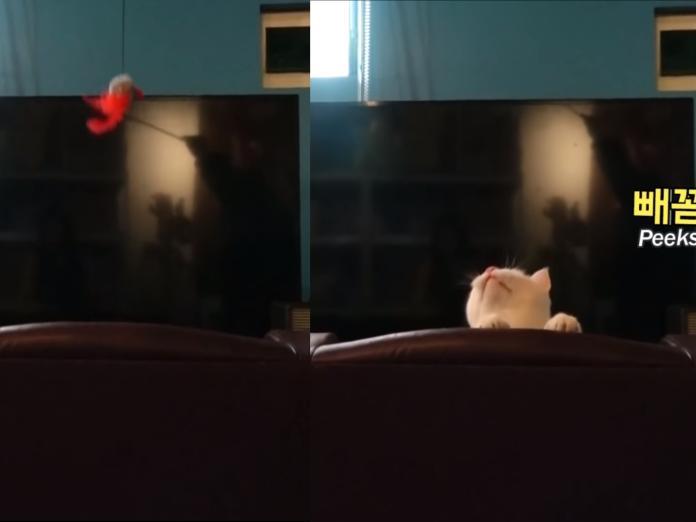 不管是玩樂或是休息,在這裡牠都感到非常自在~ (圖/Youtube@SBS TV동물농장x애니멀봐)