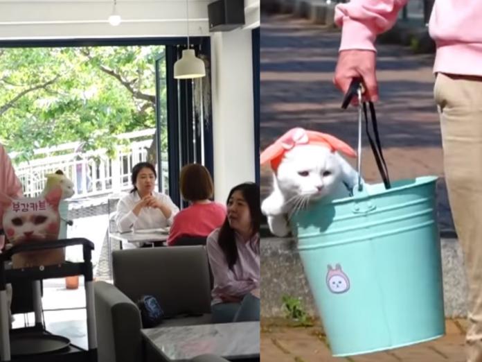 可愛的韓國貓咪坐水桶上班。 (圖/Youtube@SBS TV동물농장x애니멀봐)