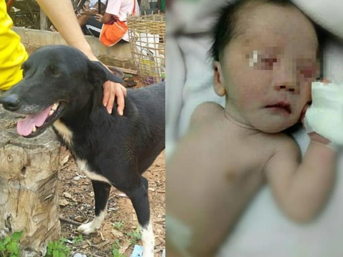 當地居民相當感謝PingPong拯救了嬰兒,將牠視為英雄! (圖/Khaosod English)