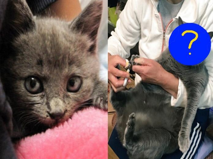 鮭夫是網友母親撿到的貓咪(圖/Twitter@toufu0420)