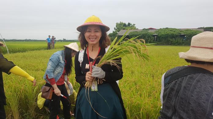 <br> ▲董娘們化身一日農夫至香田國小體驗割稻。(圖/記者陳雅芳攝,2019.05.30)