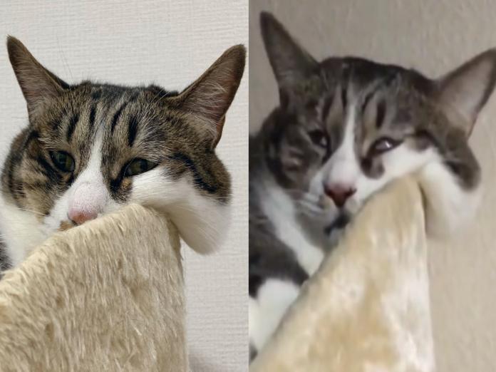 畫家將自家貓咪みかん睡覺時的崩壞模樣都分享在網路上(圖/twitter@koriri222)