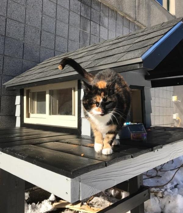 浪貓擄獲特勤隊員的心 變身警局一姐並得到豪華貓屋