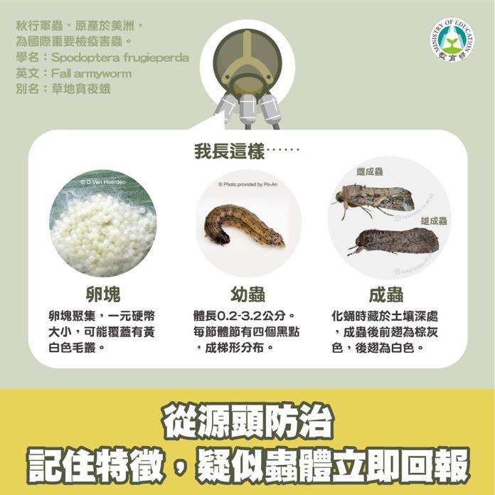 秋行軍蟲的外觀及特徵