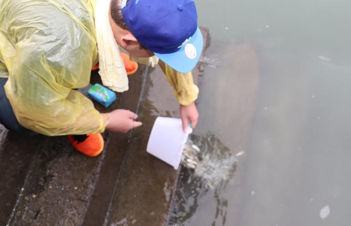 豐富漁業資源復育魚苗1
