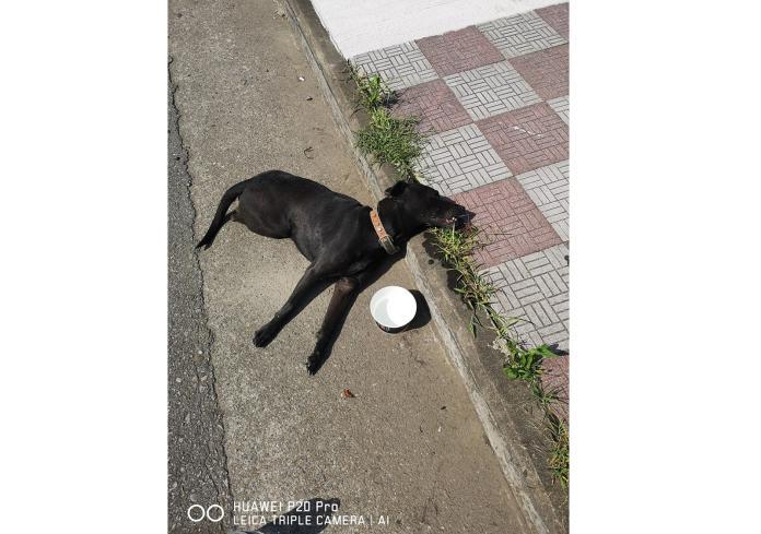 影/黑狗遭撞斷後腿 掙扎爬到路邊等待救援