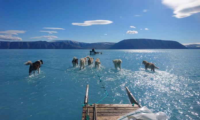 ▲丹麥氣象研究所科學家歐森拍下「雪橇犬涉水」的驚人照片。(圖/翻攝Steffen M Olsen/Twitter)