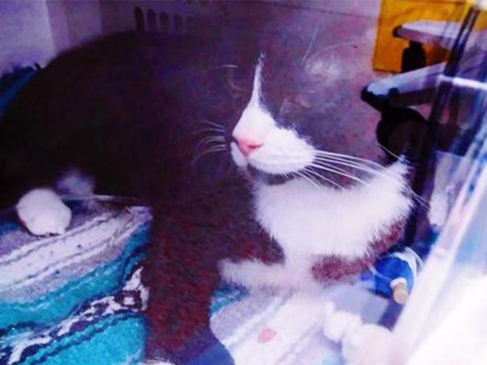 奇蹟倖存!洗衣機運轉45分鐘後 主人驚見愛貓受困其中
