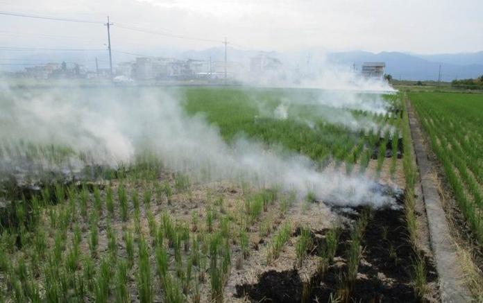 蘭陽平原稻作收割期 <b>露天燃燒</b>稻草小心被罰