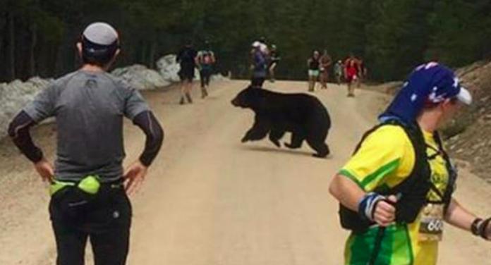 夭壽!大黑熊闖入馬拉松賽道 <b>選手</b>嚇到不敢動