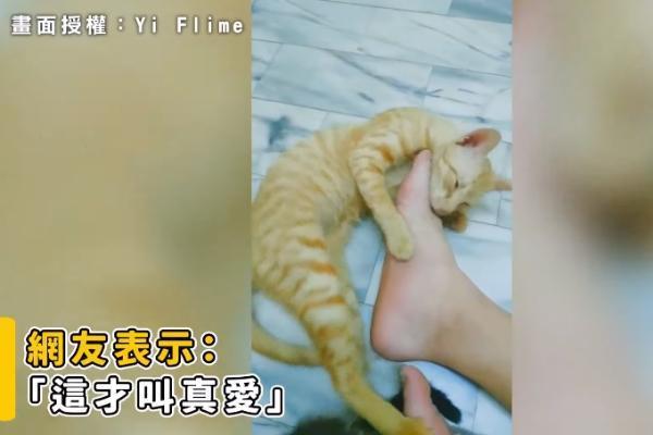 橘貓癡迷磨蹭足下「海味」 主人表示:只有你懂我!