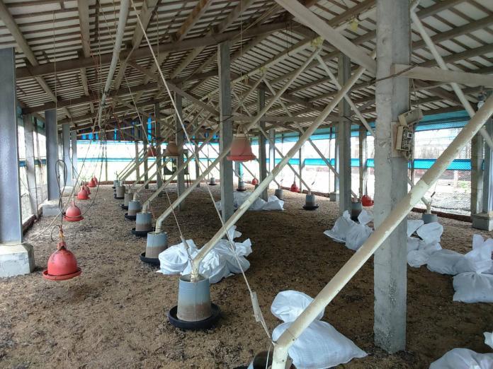 <br> ▲大城鄉土雞場確診感染H5N2亞型高病原性禽流感病毒,防疫人員完成全場撲殺清場及消毒工作,計撲殺2萬6960隻土雞。(圖/記者陳雅芳翻攝,2019.06.28)