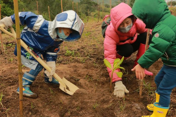 鼓勵<b>植樹</b>造林打造美麗家園 新北免費提供苗木
