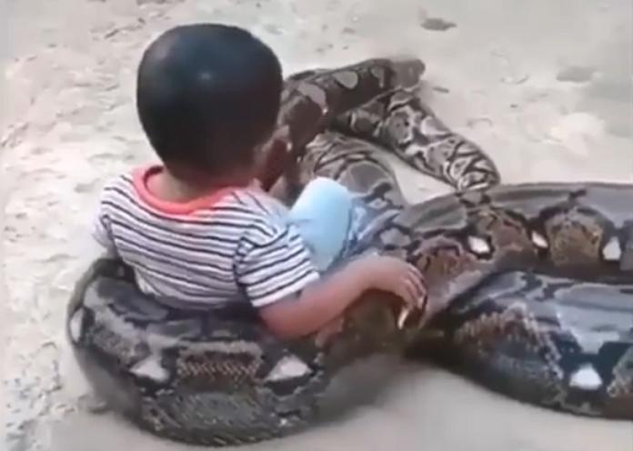 男童把巨蟒當椅子