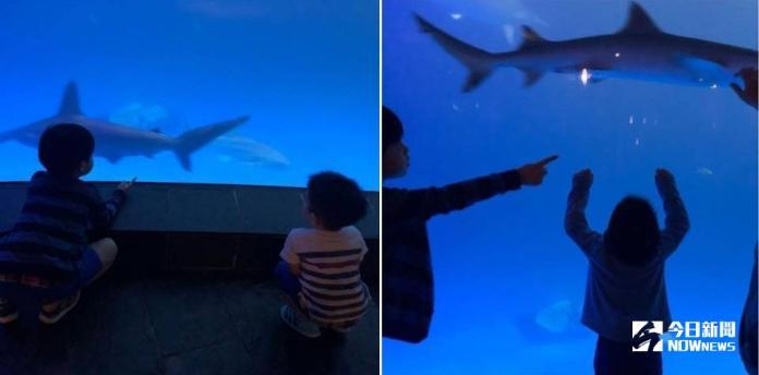 ▲陳妍希在IG分享帶兒子到墾丁海生館玩的照片。(圖/翻攝陳妍希IG)