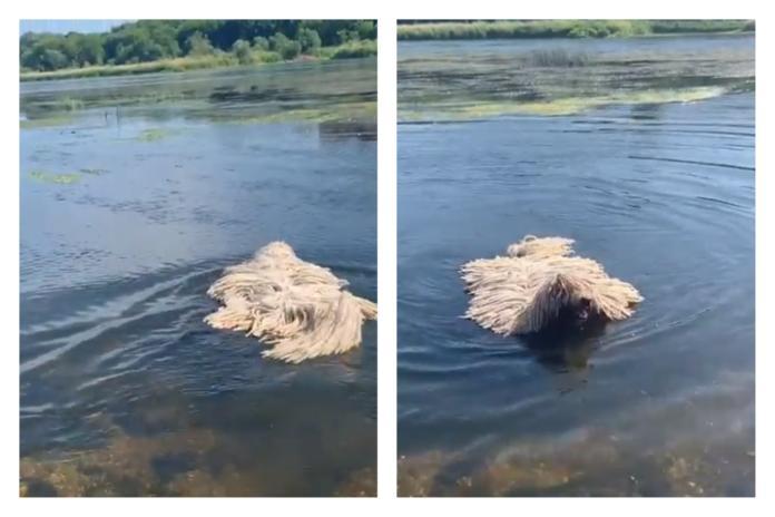河中飄「拖把」下秒驚見臉浮出 真相神展開:超療癒