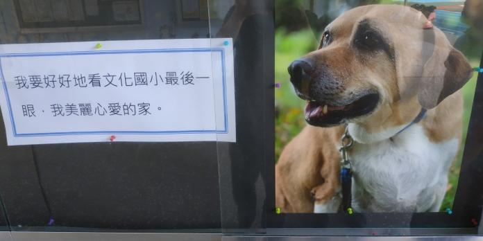 文化國小知名校犬「<b>小白襪</b>」離世 師生持花束追思