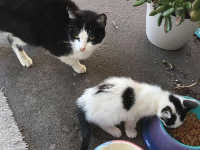 天天上門等飯飯的浪貓突失蹤 幾週後身邊多了可愛小跟班!