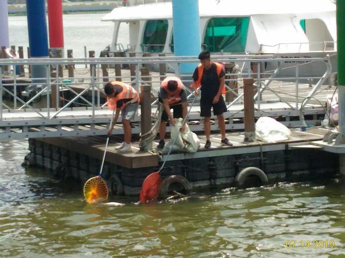 高溫少雨熱爆了!淡水河烏仔魚集體暴斃