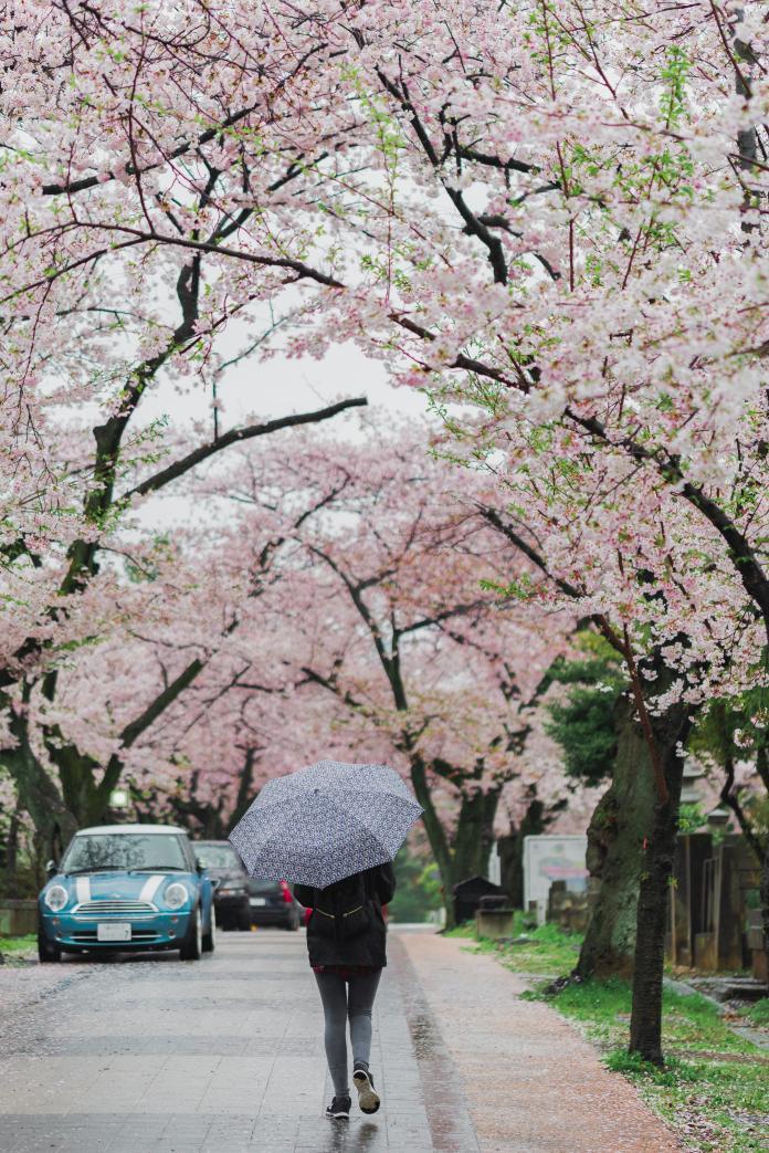 ▲日本是島國,因此降雨時節也不短。(示意圖/取自 Unsplash )