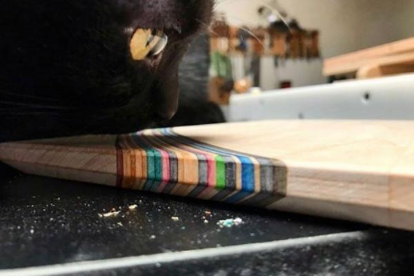 木匠師收編飢餓小黑貓 意外成為工廠最佳小監工