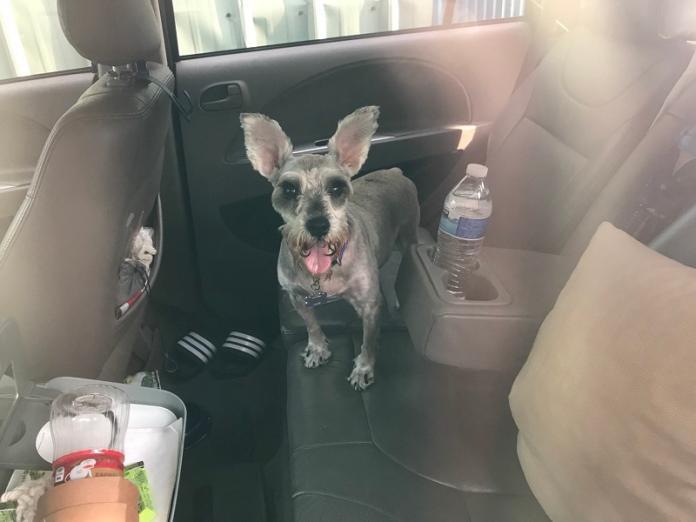 大熱天獨留毛小孩於車內 警急尋狗主人