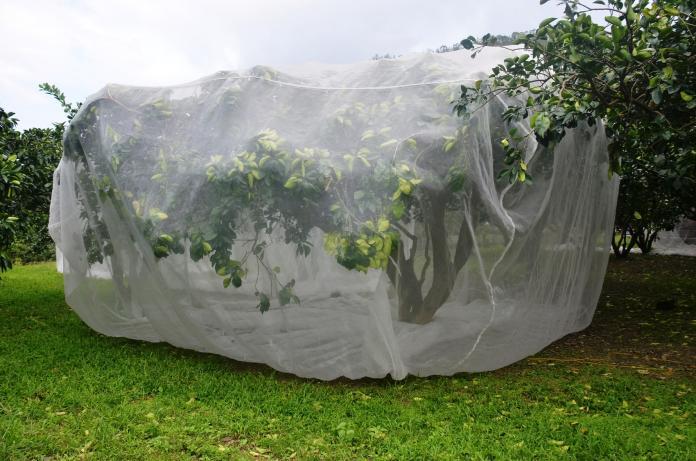 ▲農委會花蓮農改場研發文旦防風罩,有效降低風災農損。(圖/農委會提供)