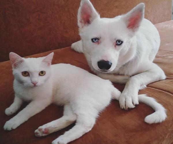 命中註定!主人正想為全白愛犬找伴 全白浪貓就送上門