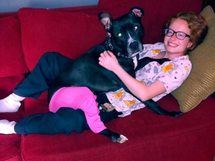 為保護狗狗受傷尾巴主人出奇招 愛犬秒變時尚性感小尤物!