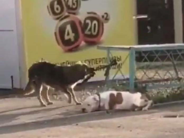 善良浪犬見狗狗被栓路邊 竟幫咬牽繩助逃脫!