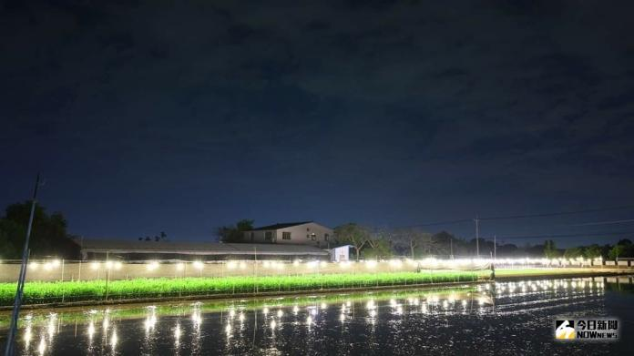 <br> ▲夜間電照菊花燈海愈夜愈美麗。(圖/記者陳雅芳攝,2019.07.23)