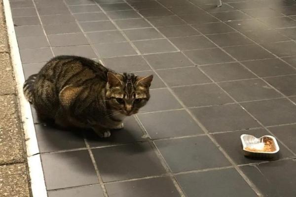家貓到超市假扮浪浪討更多食物 主人:牠騙很大!