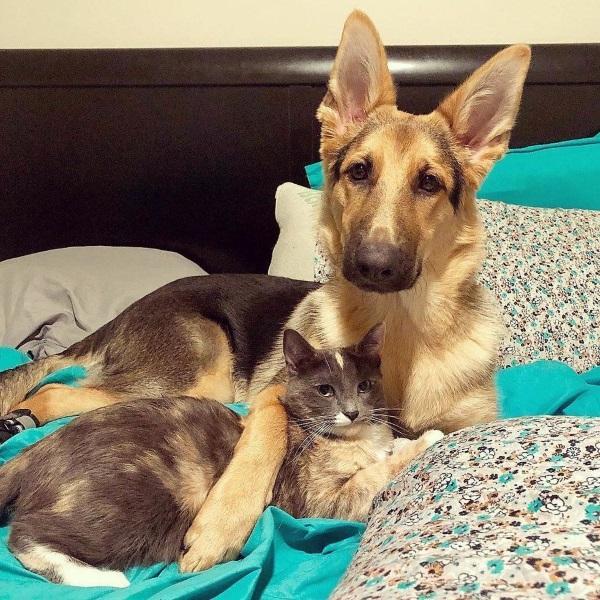 不許走!女子想送養中途小貓 愛犬卻抱緊貓姊姊從此不分開
