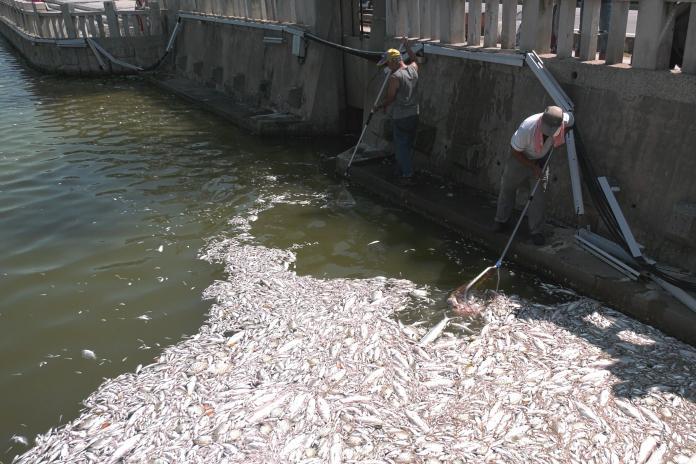 離島著名景點「莒光湖」 2萬隻魚突暴斃臭氣沖天