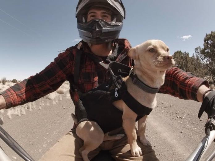 荒漠中路邊狗狗突然跳上車 自主加入男子成為旅行好夥伴!