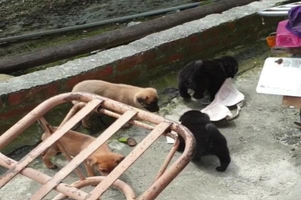 通通不准動!小狗當起內衣大盜 被徐文良園長抱緊處理